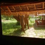 elefante al campo tendato