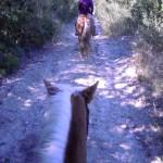 a cavallo in mezzo al bosco
