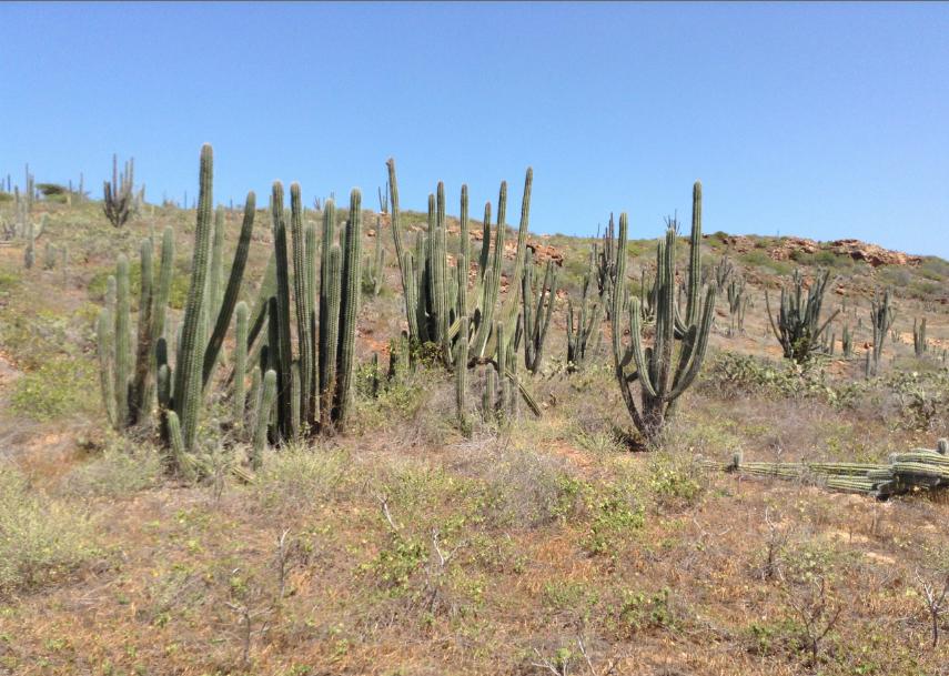 cactus ad aruba