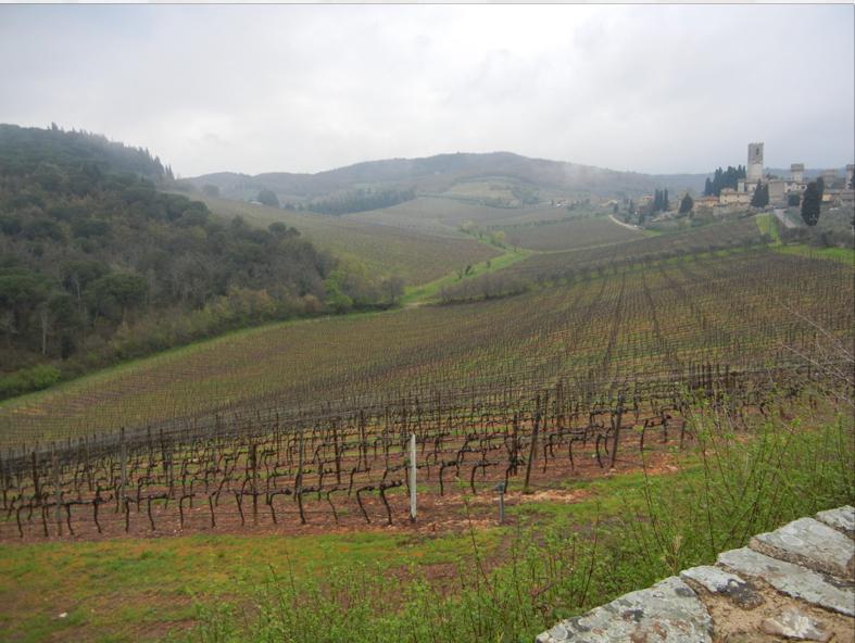 vigne antinori accanto a badia a passignano