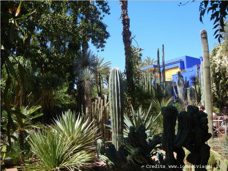 cactus giardini majorelle