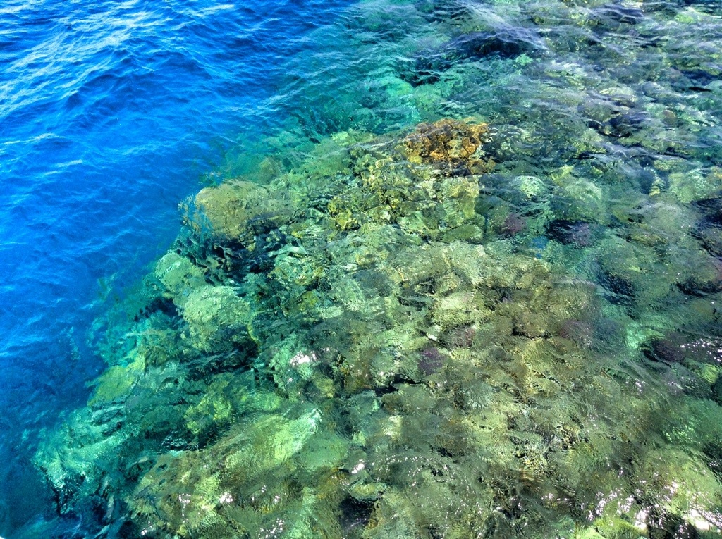 barriera corallina marsa alam