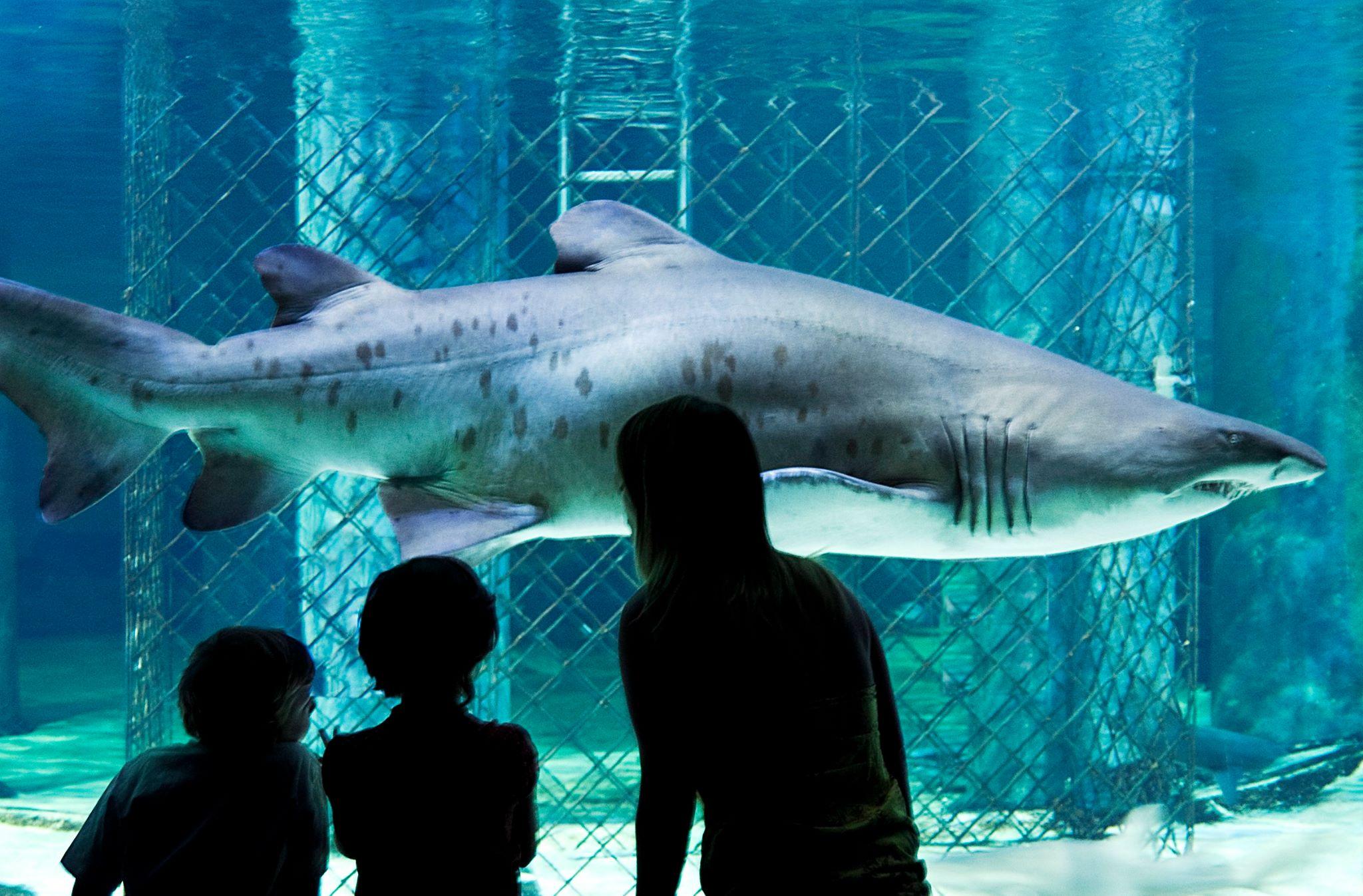 acquario cattolica squali