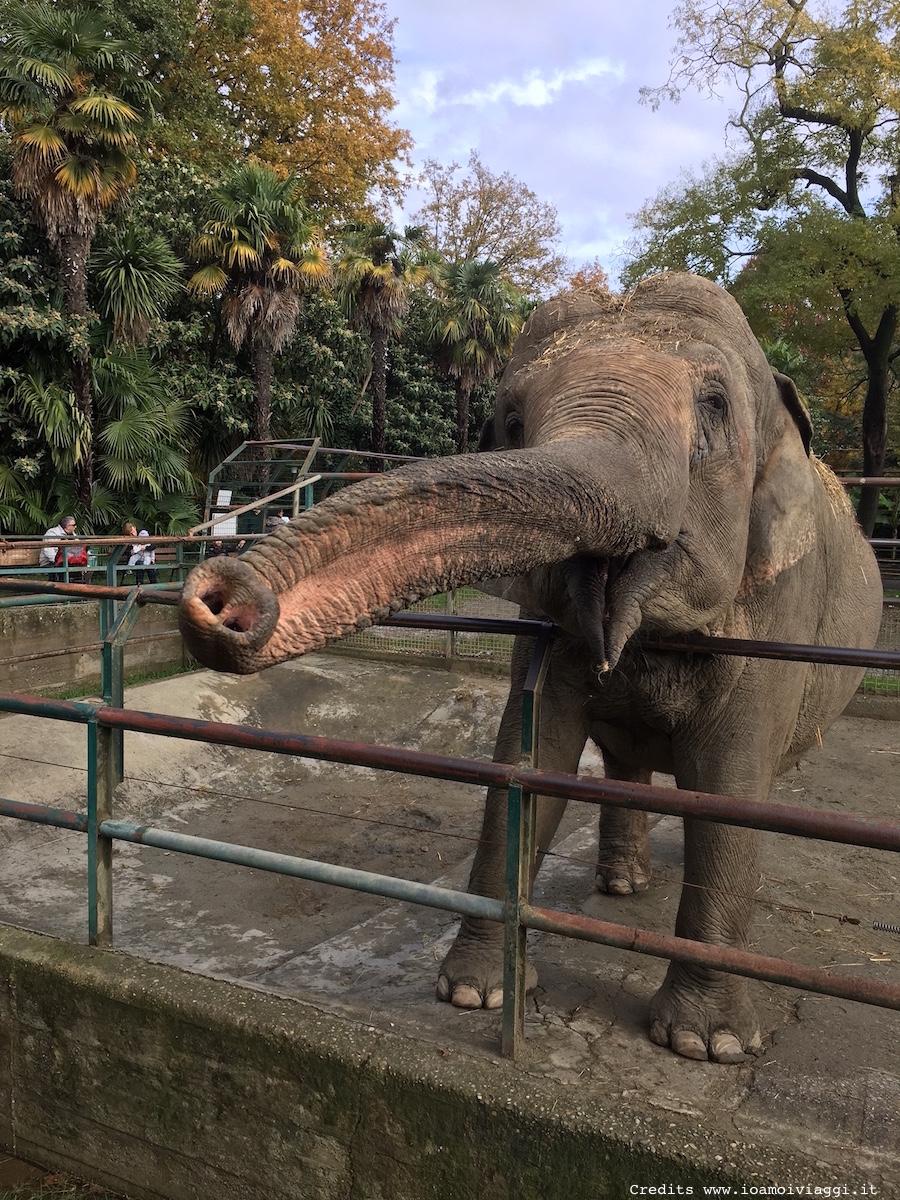 elefante-zoo-pistoia