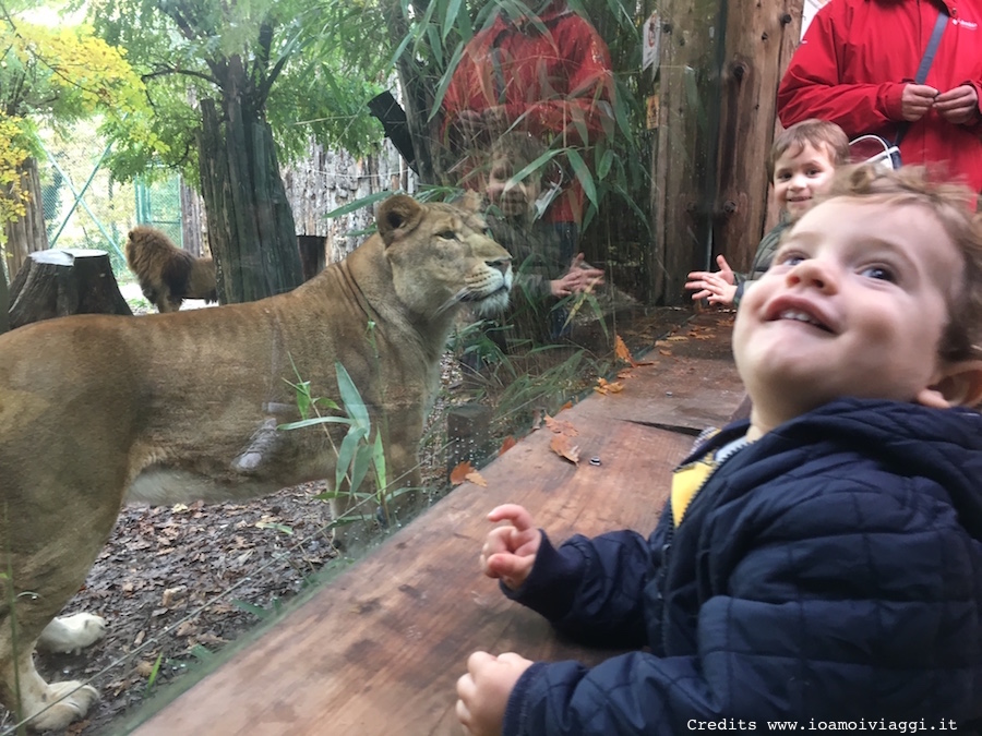 zoo-per-bambini-pistoia