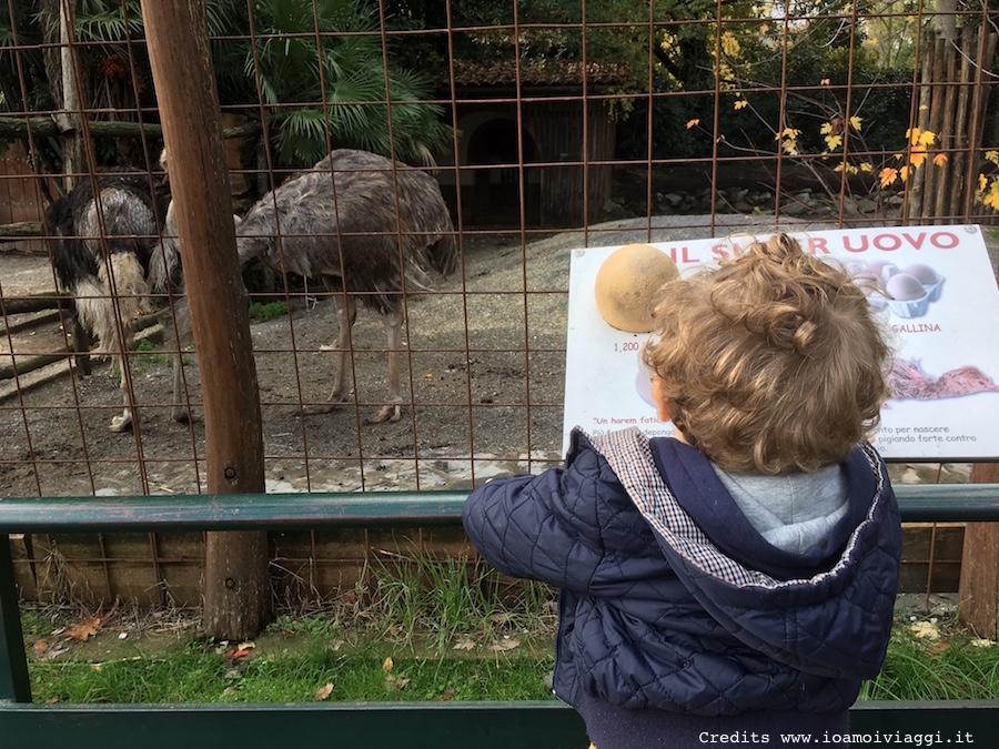 zoo-per-bambini