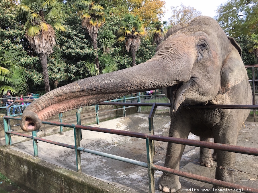 zoo-pistoia-elefante
