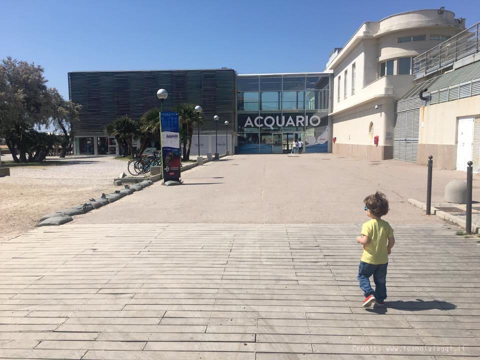 All Acquario Di Livorno Con Un Bimbo Di 3 Anni Io Amo I Viaggi