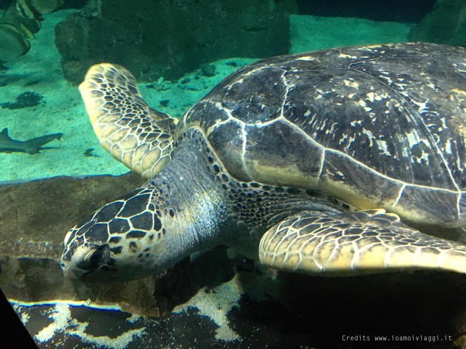 All 39 acquario di livorno con un bimbo di 3 anni io amo i for Vasche per tartarughe marine