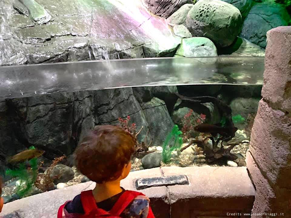 acquario sea life gardaland