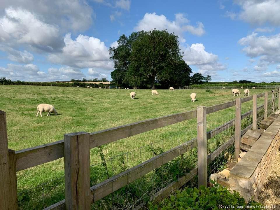 campagna inglese con pecore