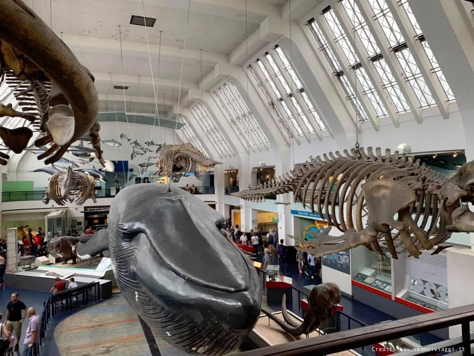 sala della balena museo storia naturale londra