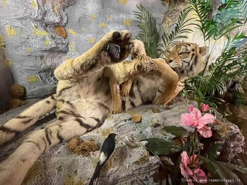 museo zoologico capannoli